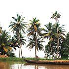 Life on the backwaters. by debjyotinayak