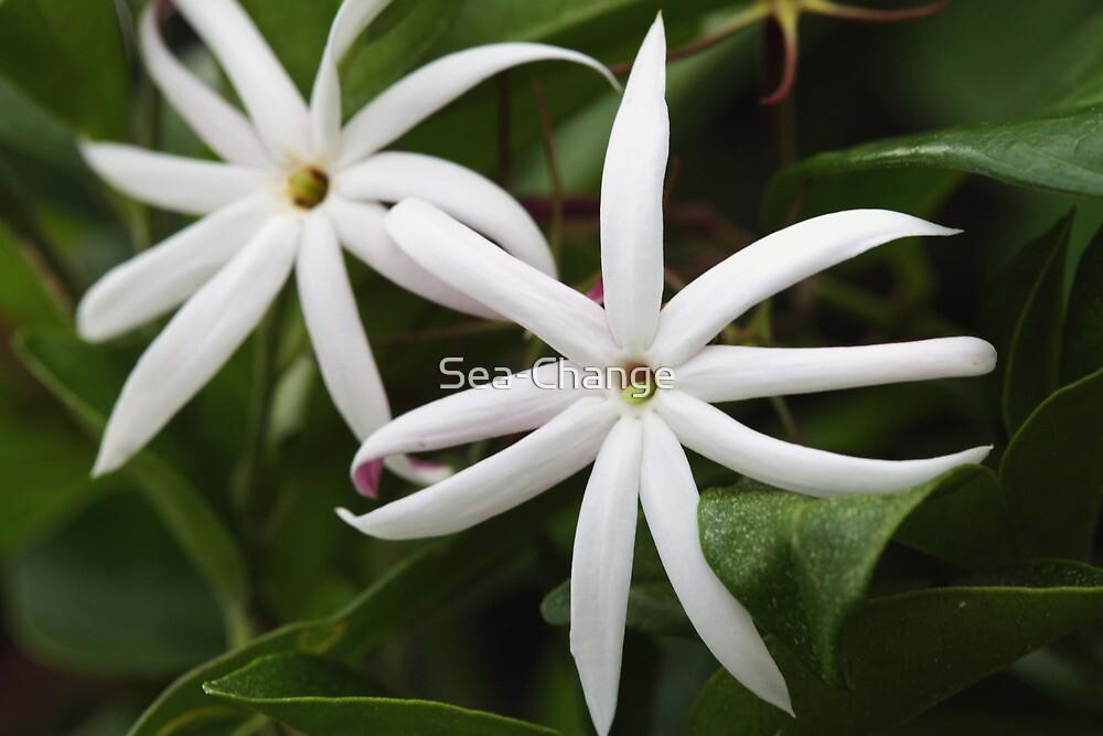 Shining star flower by Sea-Change