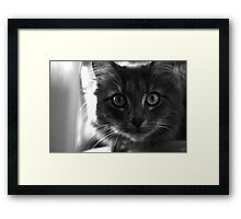 Smokey ... Framed Print