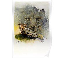 Africa - Cheetah Veldt Poster