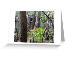 Spring at the Swamp Greeting Card