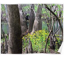 Spring at the Swamp Poster