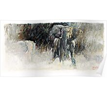 Africa - Charging Elephant Poster