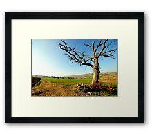 Countryside  landscape, field, tree and blue sky Framed Print