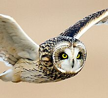 OOOWL'L BE BACK by Dennis  Small