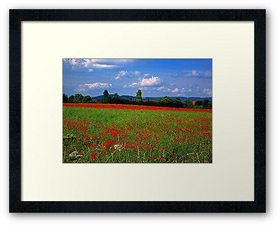 Poppy Field  (Early May) by Trevor Kersley