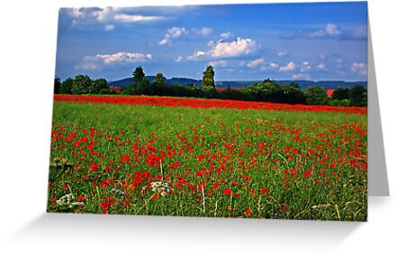 Poppy Field  (Early May) by Trevor Kersley