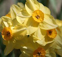 Sun burst bouquet by fionahoratio