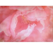 Pretty in Pink ©  Photographic Print