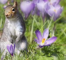 The Crocus patch by Lyn Evans