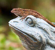 08-147 ~ Lizard On Frog by djyoriginals