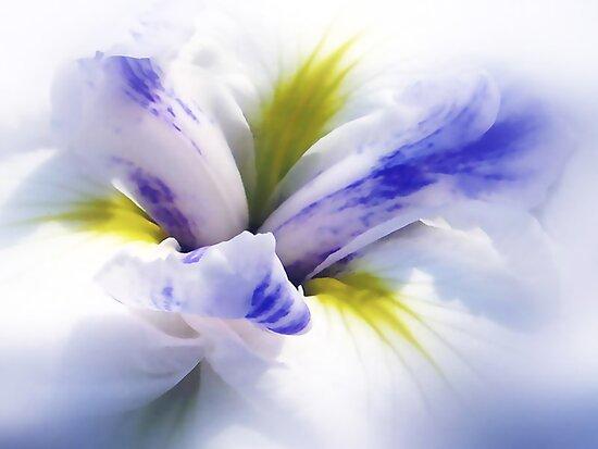 Iris Spring by Jessica Jenney