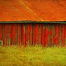 Old Red by Terrie Taylor