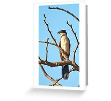 Coucal Greeting Card