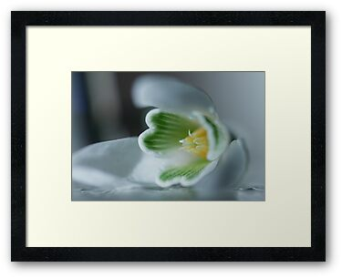 Found a SnowDrop in my Garden Today © by JUSTART