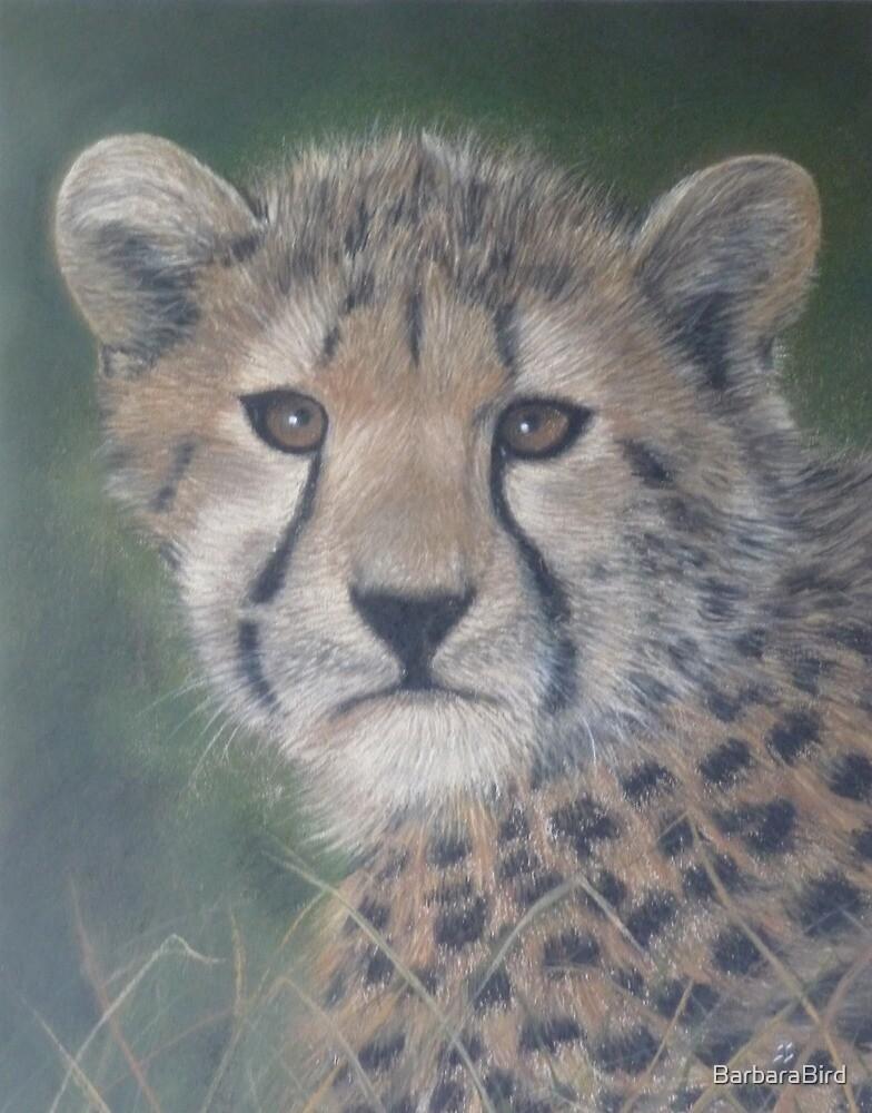 Young Cheetah by BarbaraBird