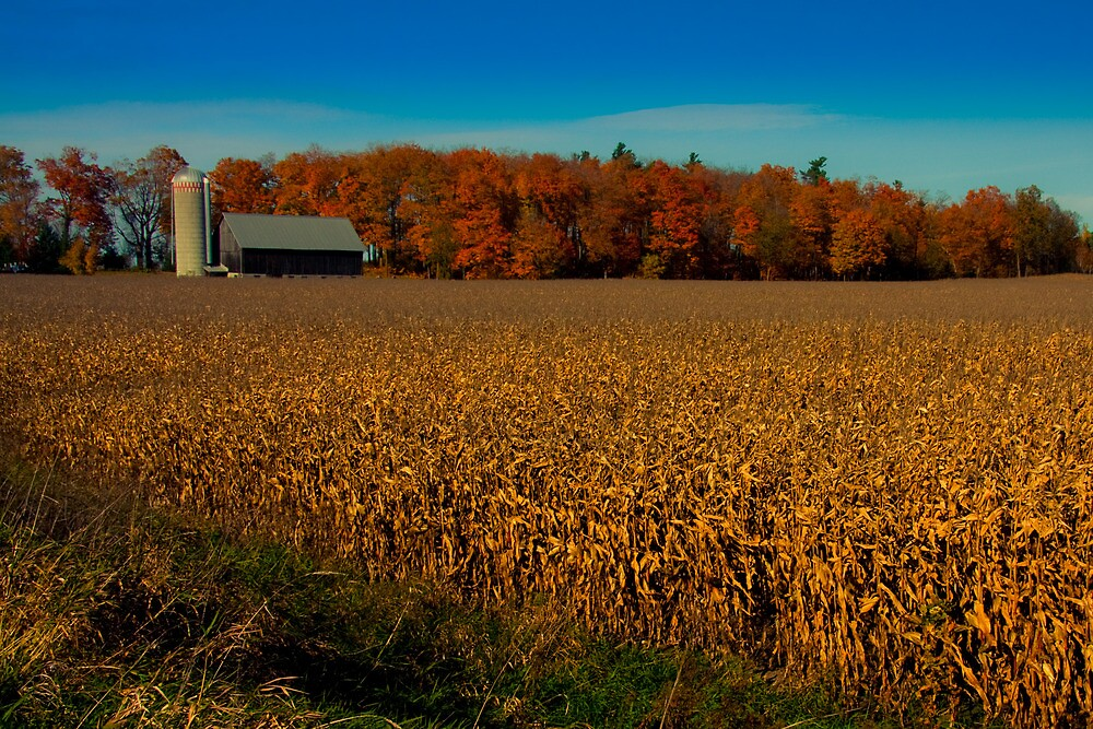 Autumn Corn Field by Benjamin Brauer