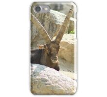 Ibex at a Zoo iPhone Case/Skin