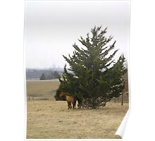 Horses In the Landscape Poster