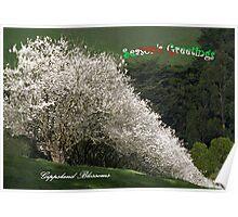 Gippsland Blossoms at Christmas Poster