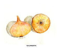 onion by Nataliya Stoyanova
