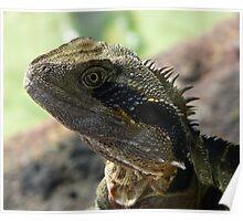 Portrait - Male Water Dragon Poster