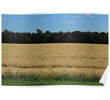 Field of Wheat on the Prairies Poster
