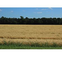 Field of Wheat on the Prairies Photographic Print