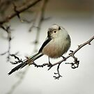 Hi there, little Long tailed Tit by steppeland