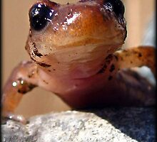 Smiling Salamander by Angie O'Connor