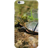 Two Western Painted Turtles iPhone Case/Skin