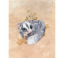 Sugar Glider! Photographic Print