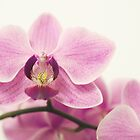 orchid III by hannes cmarits
