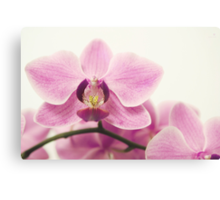 orchid III Canvas Print