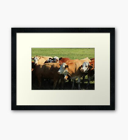 Cattle on the Prairies Framed Print
