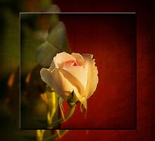 Yesterday's Rose by Trudy Wilkerson