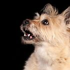 Happy dog profile by natalies