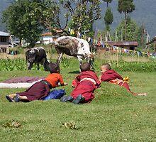 Cow Watching II by BradBaker