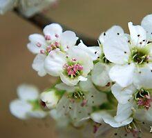 Spring Blossoms II by Mattie Bryant