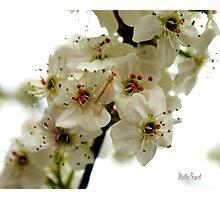 Spring Blossoms V Photographic Print