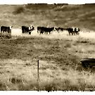 Moo Cows in Sepia by Jennifer Craker