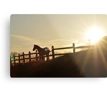 Equine Silhouette Metal Print