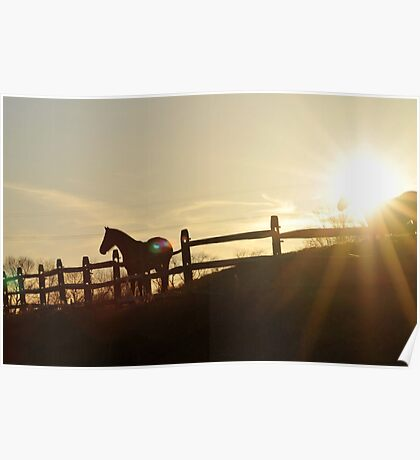 Equine Silhouette Poster
