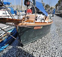 Million Dead Fish Redondo Beach, Calif.. by Rita  H. Ireland
