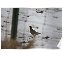 Gray Partridge Poster