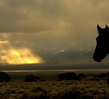 Where Have All The Wild Horses Gone? by Jeanne  Nations