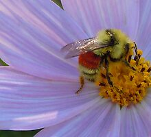 Bee Mine 2 by Marijane  Moyer