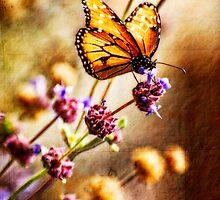 Butterflies by Saija  Lehtonen