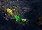 Kermit at Mer Bleue by Benjamin Brauer
