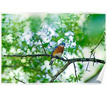 Blue Bird in the Morning Air Poster